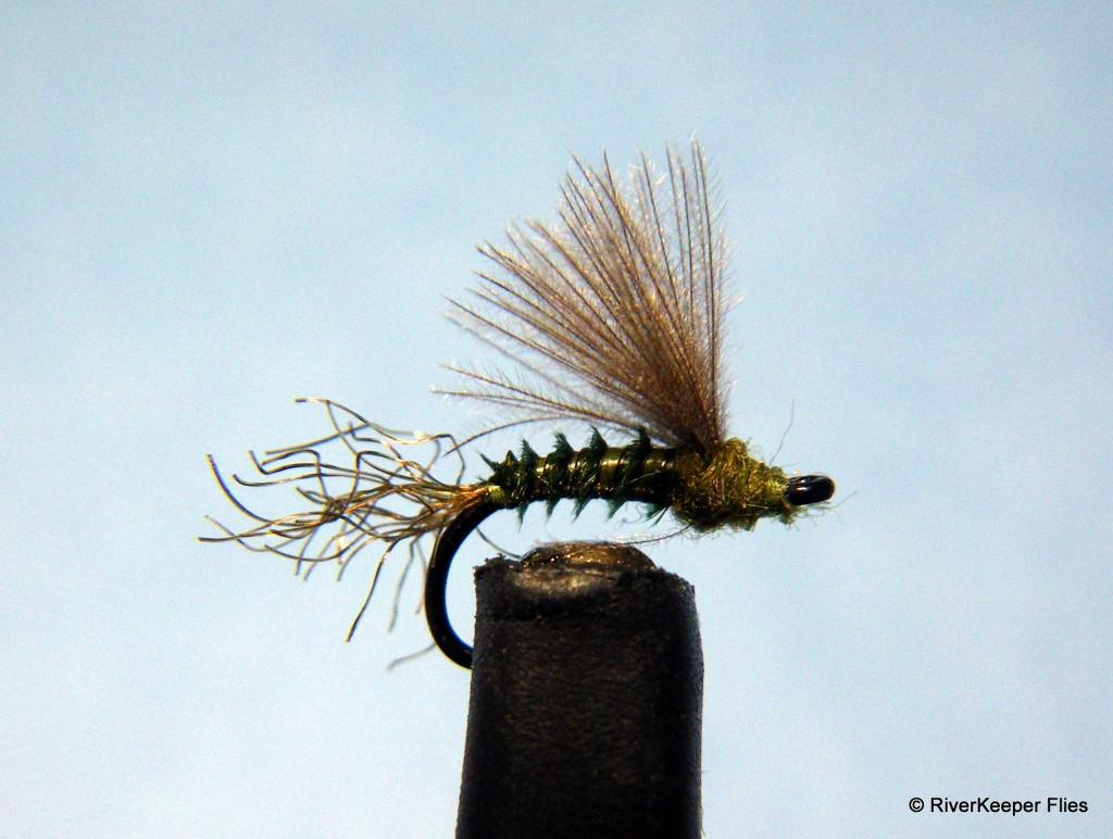BWO CDC Biot | www.johnkreft.com