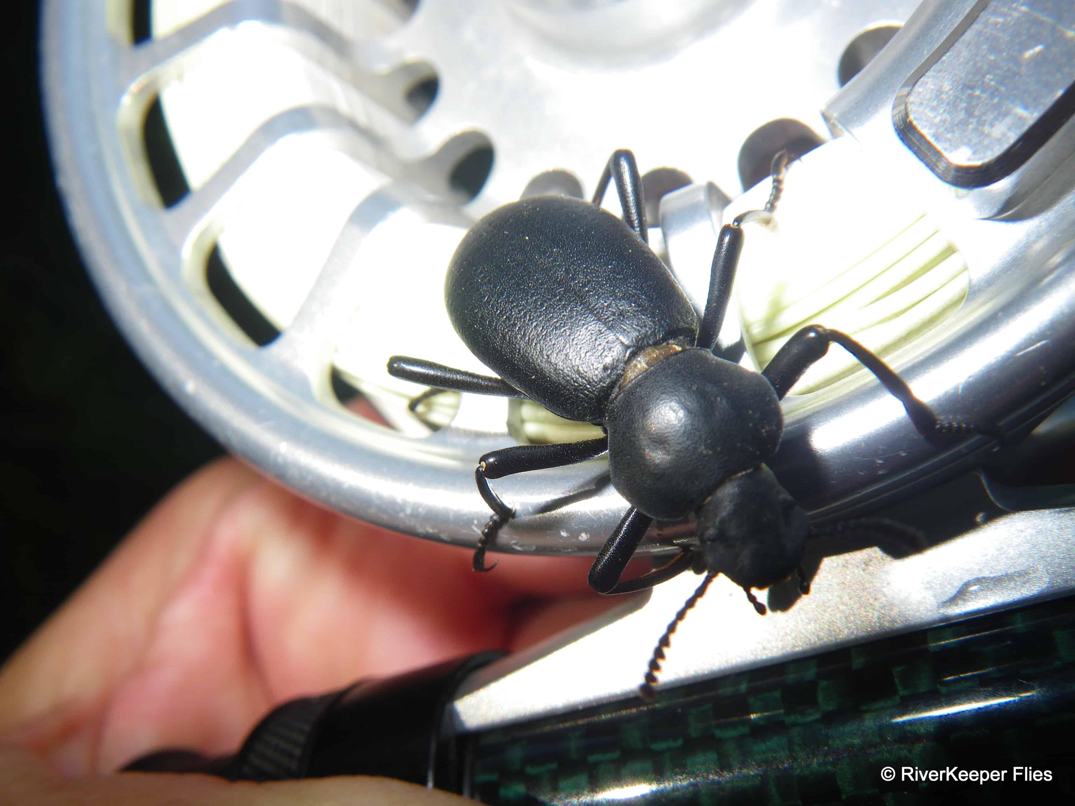 Beetle on reel | www.johnkreft.com