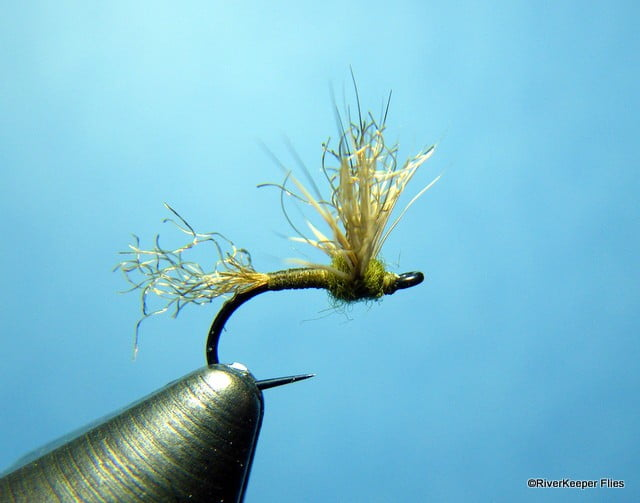 BWO - Improved Sparkle Dun | www.johnkreft.com