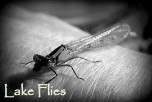 Lake Flies | www.johnkreft.com