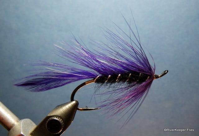 Maxwells Purple Matuka | www.johnkreft.com