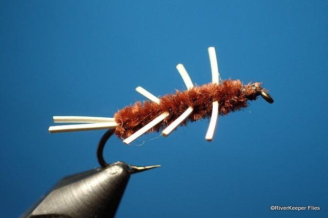 Girdle Bug   www.johnkreft.com