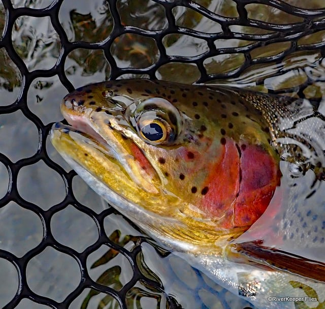Metolius Rainbow Rosy Cheeks | www.johnkreft.com