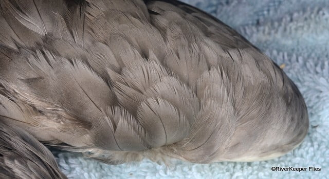 Mallard Wing - Covert Feathers | www.johnkreft.com
