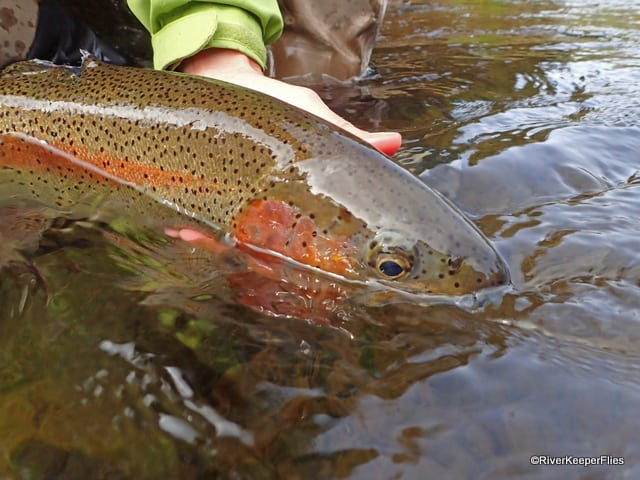 Metolius Rainbow | www.johnkreft.com