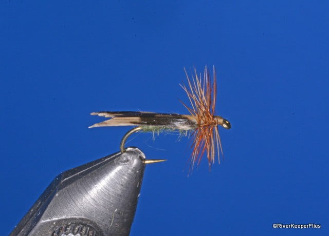 King River Caddis | www.johnkreft.com
