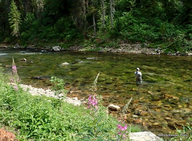 Fly Fishing The St Joe River Id