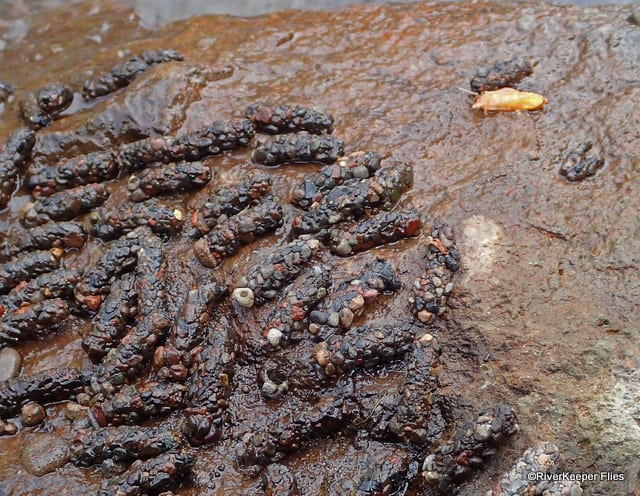 October Caddis Cases on Rock | www.johnkreft.com