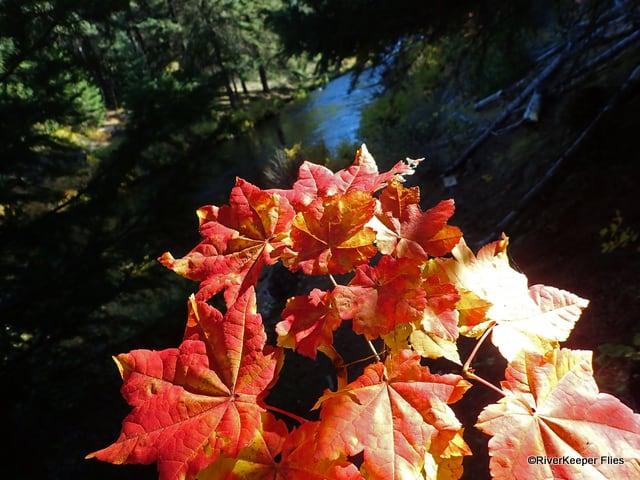 Fall Leaves on the Metolius | www.johnkreft.com
