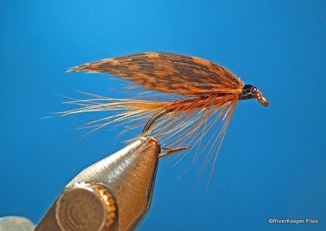 The Brown Turkey | www.johnkreft.com