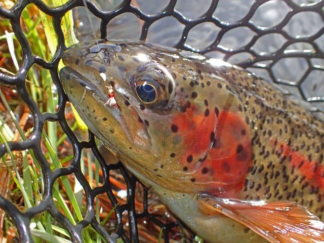Winter Rainbow with $3 Dip | www.johnkreft.com