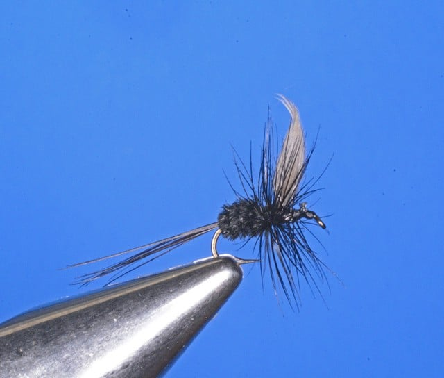 Baileys Black Gnat