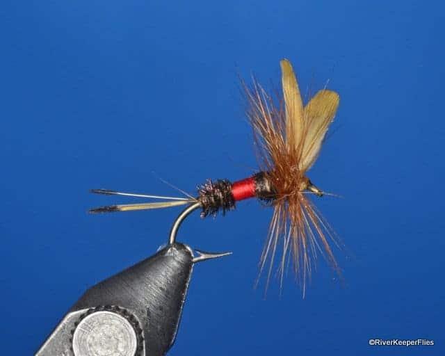 Royal Coachman Dry Fly