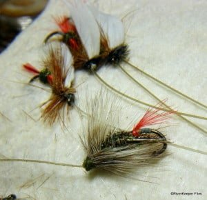Gray Hackle Peacock