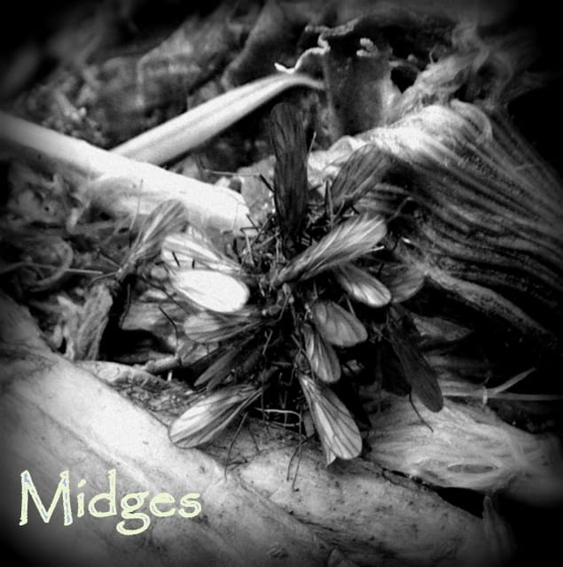 Midges | www.johnkreft.com