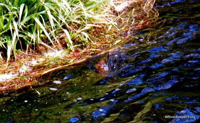 Fish rising | www.johnkreft.com