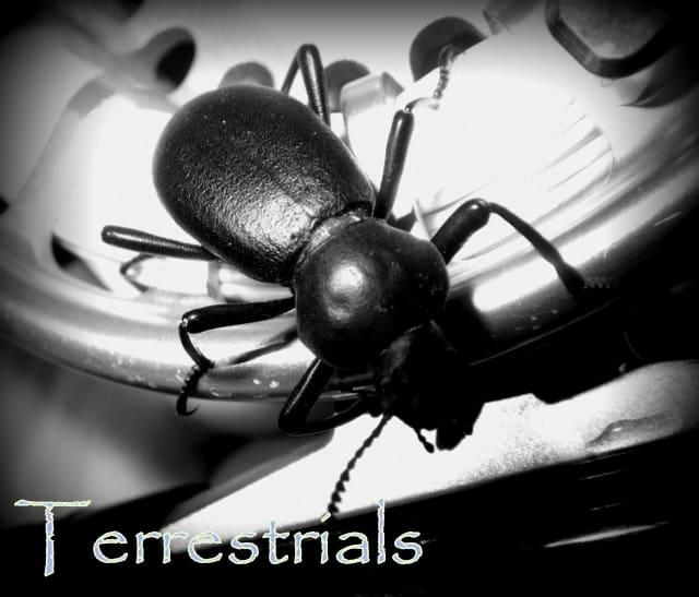 Terrestrials | www.johnkreft.com