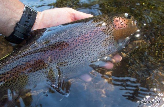Metolius Rainbow | www.johnkreft.com