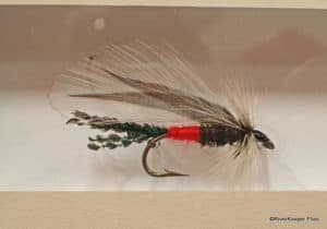 Spruce Peacock