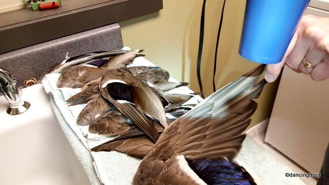 Drying Mallard Wings | www.johnkreft.com