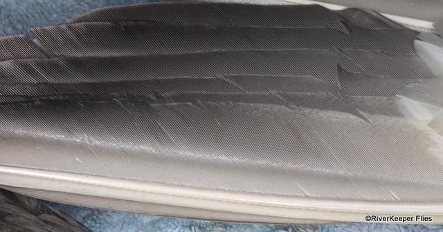 Mallard Wing - Primary Feather | www.johnkreft.com