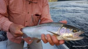 Upper Columbia River Fly Fishing
