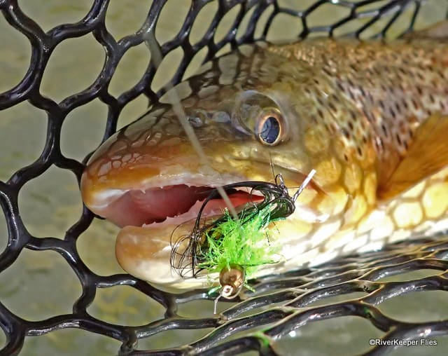 East Lake Brown Trout with Streamer | www.johnkreft.com