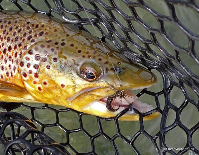East Lake Brown Trout | www.johnkreft.com