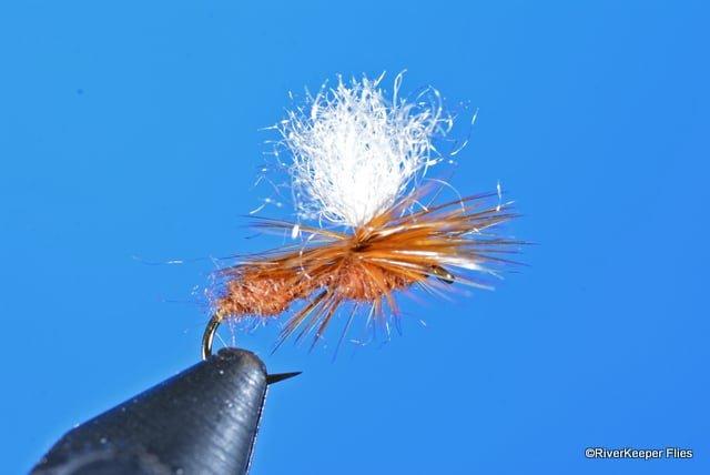 Arrick's Parachute Ant | www.johnkreft.com