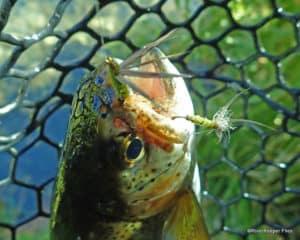 Fishing and Tying Flies