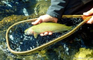 Fly Fishing Idaho's Kelly Creek and North Fork Clearwater River