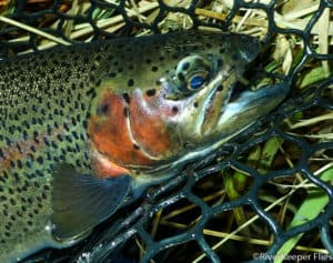 Fly Fishing on the Metolius River in November