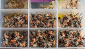 Fishing with Beetles