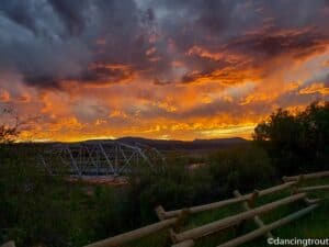 Fly Fishing the Madison River in 2020