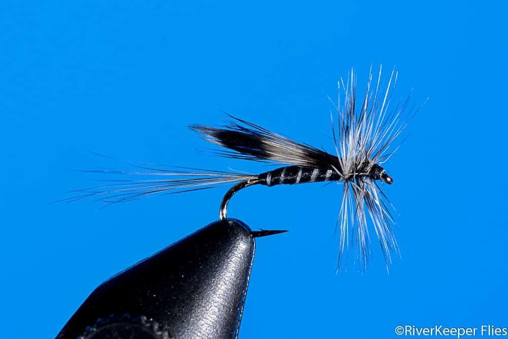 California Mosquito | www.johnkreft.com